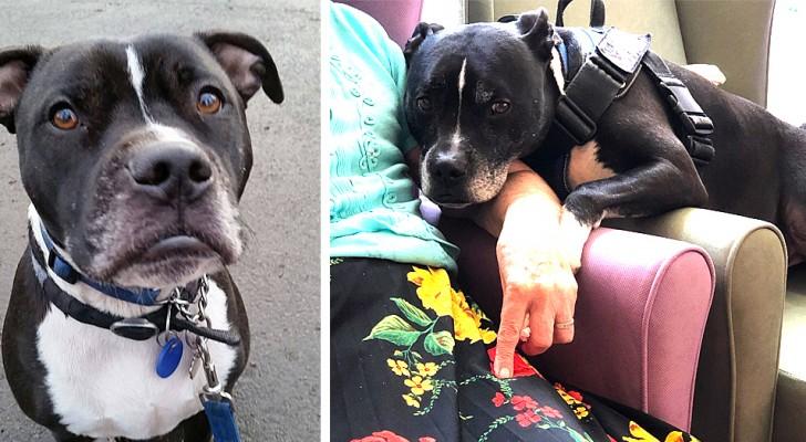 Dodger, de hond die de beste vriend is geworden van alle oudere bewoners van een bejaardentehuis