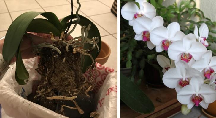 5 factoren om rekening mee te houden bij het verzorgen van orchideeën