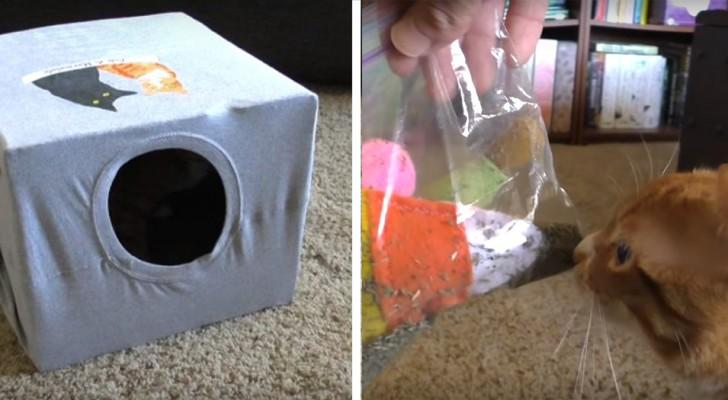 5 trovate brillanti per giocare con i nostri gatti e non farli annoiare mai