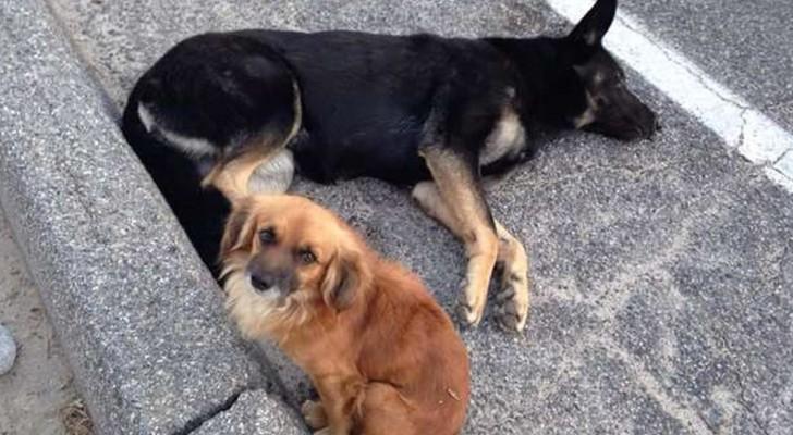 Este cachorrinho ficou perto da sua amiga grávida até que chegasse o socorro