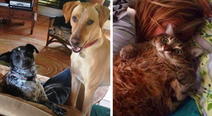 18 funny photos of cats and dogs as they interact with their favorite humans
