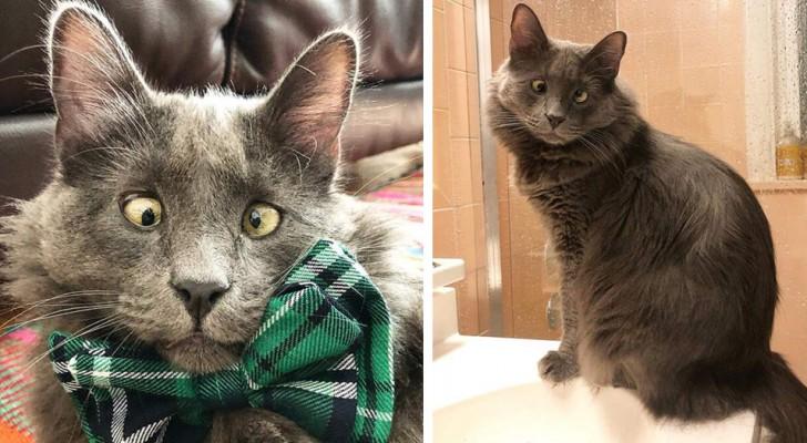 Deze kat met een hevige strabismus is een echte ster op het web geworden dankzij zijn tederheid en sympathie