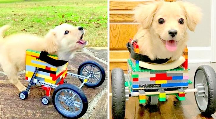 Elle ne peut pas utiliser ses pattes avant, alors un enfant construit un fauteuil roulant en Lego pour sa chienne