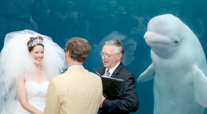 Ein Wal störte das Eheversprechen dieses Paares, kurz bevor sie das schicksalhafte Ja sagten
