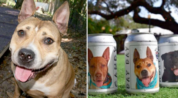 This woman recognizes the photo of her pit bull dog that she had lost three years earlier on a beer can