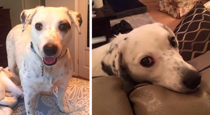 Her owner abandoned her because she is too