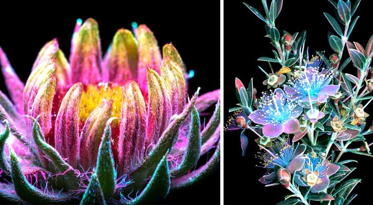 Questo fotografo è riuscito a immortalare la luce magica e invisibile emessa dalle piante