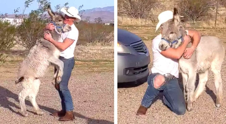 This wild donkey jumps, runs, and wags his tail just like a dog when his human friend returns home