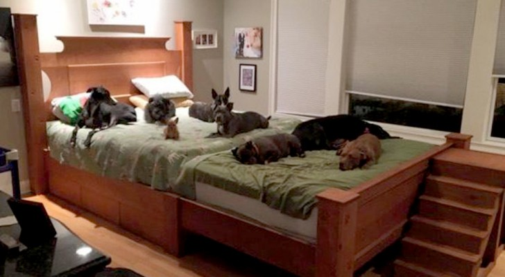A husband and wife had a giant bed built to sleep with their 8 dogs rescued from the street