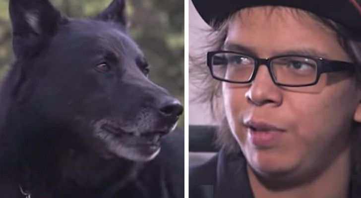 After a tragic car accident, this dog takes care of his owner for 40 hours until help arrives
