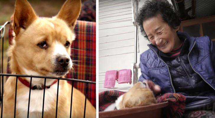 Una nonna povera adotta un cane paralizzato: il web si commuove e raccoglie i fondi per le sue cure mediche