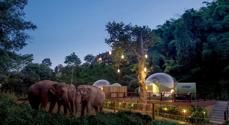 In diesem Resort in Thailand können Sie in einer durchsichtigen Blase, umgeben von Elefanten, die vor der Ausbeutung gerettet wurden, übernachten