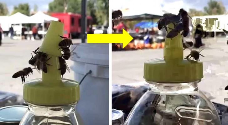 Deze bijen hebben hun krachten gebundeld om het deksel van een pot honing te openen