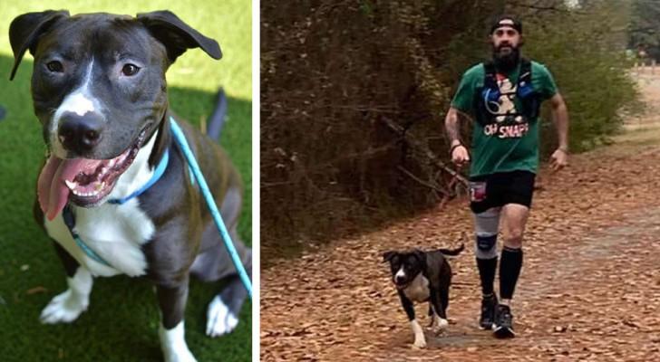 Ein Streuner schließt sich spontan einem Marathon an: Nach dem Rennen helfen ihm die Athleten, eine Familie zu finden