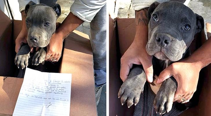 Ein 12-jähriger Junge lässt seinen Welpen vor einem Tierheim zurück, um ihn vor dem Missbrauch seines Vaters zu retten