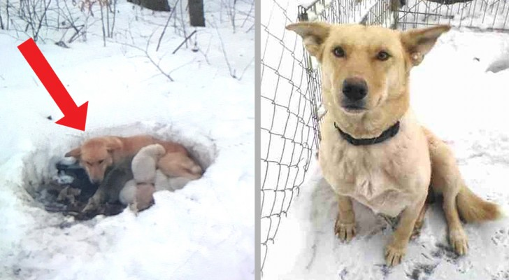This dog kept her baby pups from freezing to death by burrowing a hole in the snow and shielding them with her body