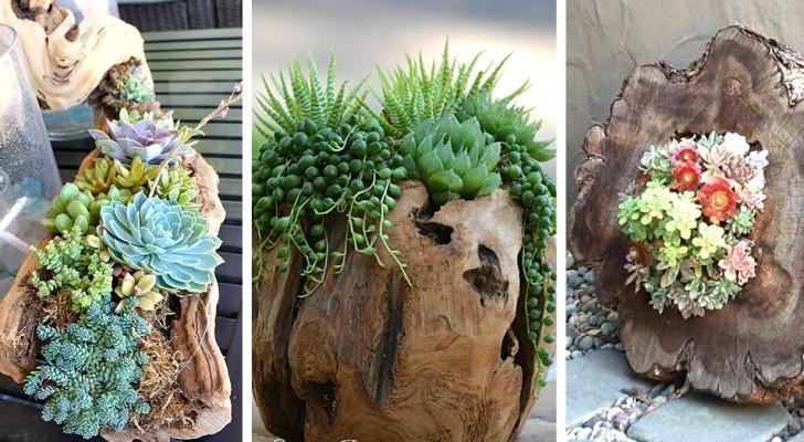 8 trovate stupende per decorare tronchi con le piante grasse e succulente, da provare in casa e in giardino