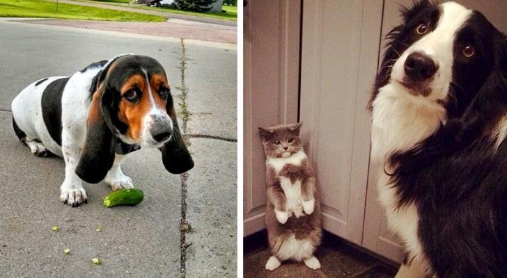 Questi animali domestici sono stati colti in flagrante dai loro padroni in atti assurdi ed esilaranti
