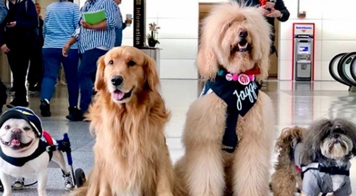 Questo aeroporto ha assunto 22 cani da terapia per alleviare lo stress dei viaggiatori nelle lunghe attese