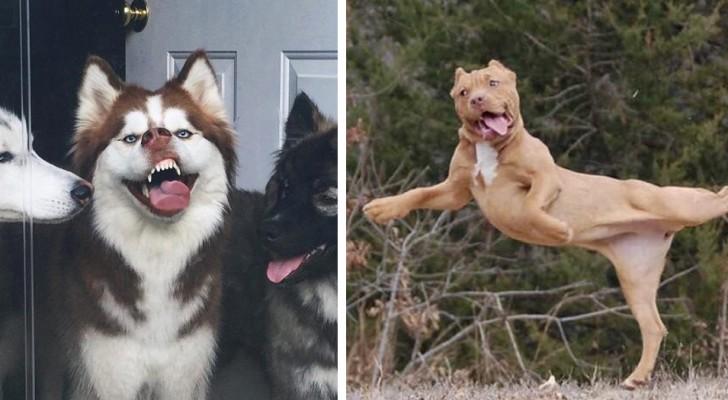 15 foto di animali talmente poco fotogenici da risultare adorabili