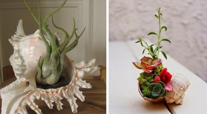 18 trovate originali per creare mini-giardini dentro le conchiglie e trasformarle in splendide fioriere