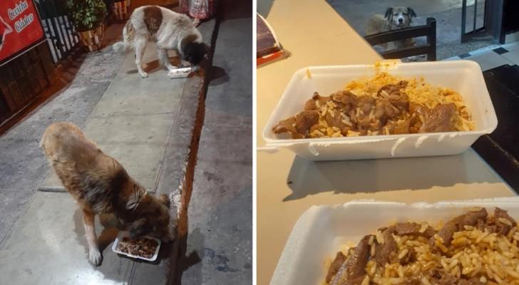 Dit Peruaanse restaurant bereidt een alternatief menu voor zwerfhonden met overgebleven spiesjes vlees