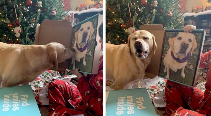 Questo tenero cagnolino non riesce a smettere di fissare il suo ritratto quando la sua famiglia glielo mostra