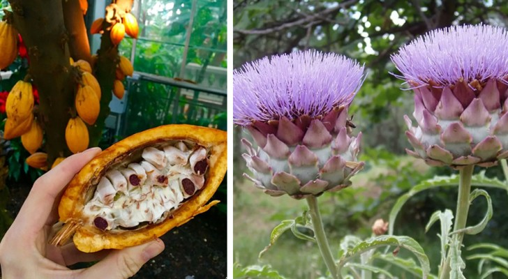 9 vegetali molto comuni di cui non tutti conoscono la forma originaria