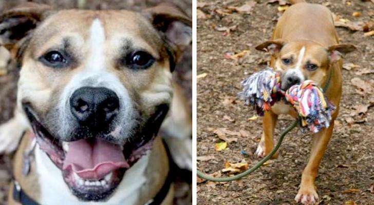 La storia di Max, il cane giocherellone che da ben 9 anni non riesce a trovare una famiglia adottiva