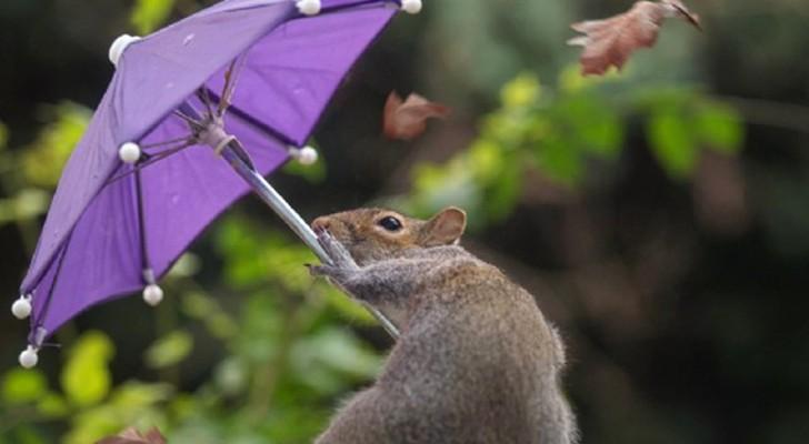 Un photographe immortalise un écureuil qui se débat contre le vent avec son minuscule parapluie