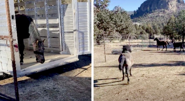 After weeks of fighting to get them reunited, this momma horse sees her twin foals for the first time in two months
