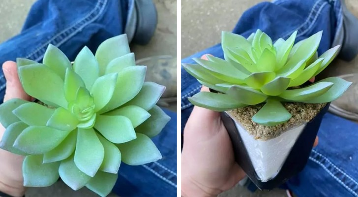 Elle a pris soin de sa belle plante grasse pendant deux longues années, puis elle a découvert qu'elle était fausse