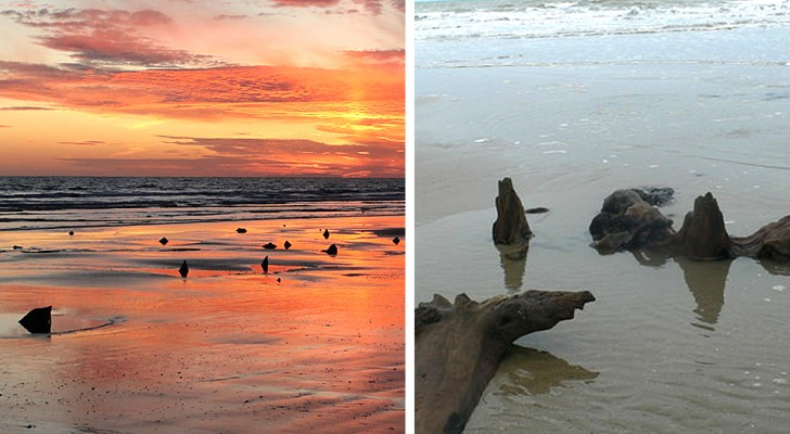 In Galles, le tempeste fanno riemergere dalla sabbia un'antichissima foresta fossile