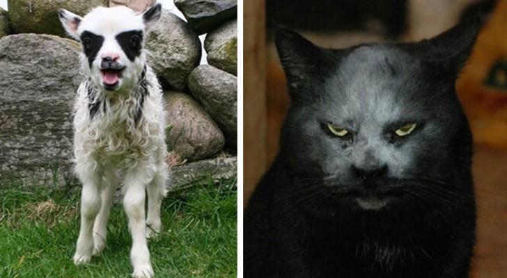 11 foto's van dieren die lijken te spelen in een Black Metal-band