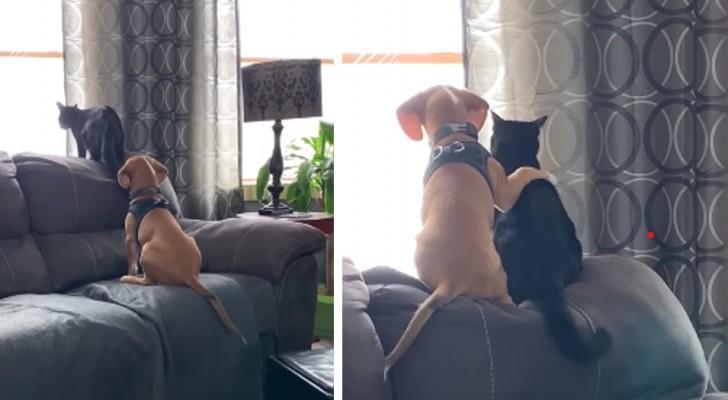 De vriendschap tussen hond en kat in al zijn tederheid: de hond omhelst letterlijk zijn kattenvriend