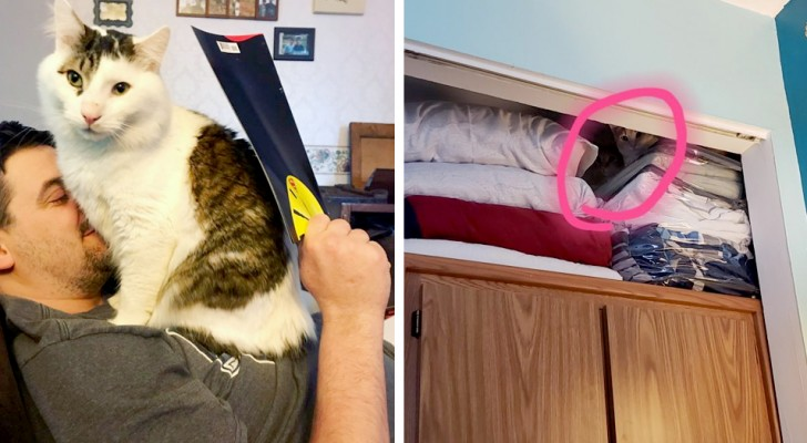 17 scenes of daily life that only our pets can bring alive