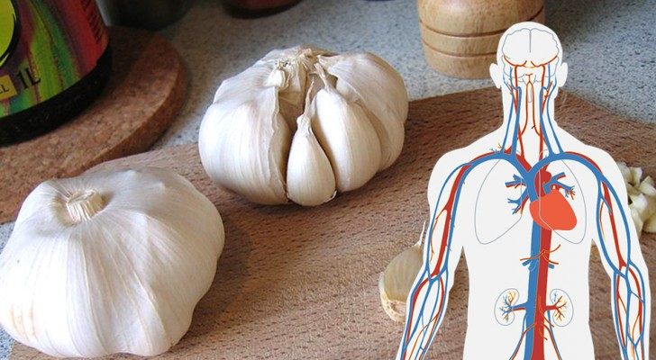 5 benefits of garlic, a plant with antibacterial and nourishing properties that is a friend to our health