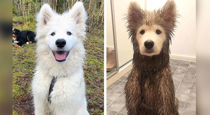 14 foto's van honden die zojuist het plezier van rollen in een modderpoel hebben ontdekt