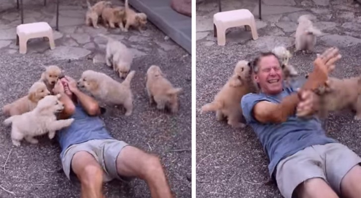 A wave of Golden Retriever puppies overwhelms this man who can't stop laughing