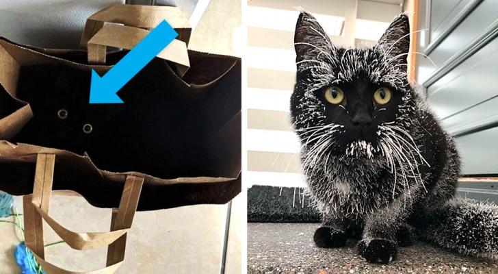 13 gedenkwaardige foto's van zwarte katten in al hun sympathie en elegantie