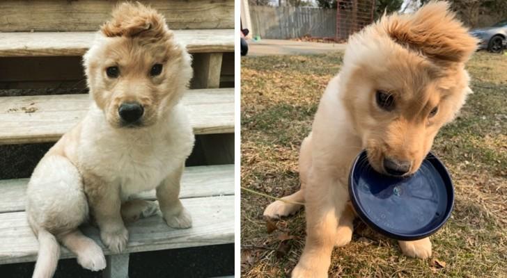 Deze pup heeft maar één oor en iedereen noemt haar de eenhoornhond: wanneer een defect verandert in een kwaliteit