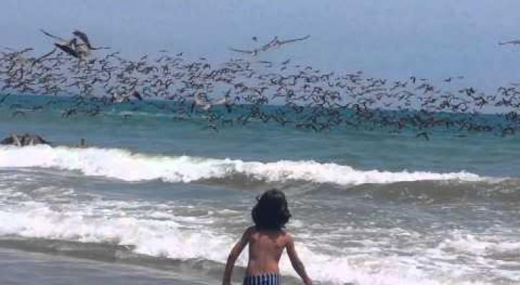 La SPETTACOLARE battuta di pesca di centinaia di pellicani