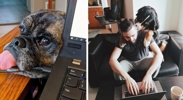 10 foto's van mensen die thuis werken samen met hun speciale en nieuwsgierige viervoetige