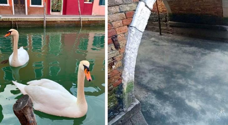 Ohne Touristen und Boote sind die Kanäle von Venedig wieder frei und die Tiere holen sich die Natur zurück