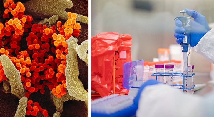 Das Coronavirus wurde nicht im Labor hergestellt: die Antwort einer Forschung auf Verschwörungstheorien und gefälschte Nachrichten