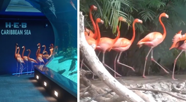 Das Aquarium wird wegen des Coronavirus geschlossen: Flamingos