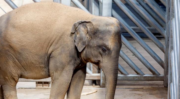 Ora che siamo tutti in isolamento forzato, possiamo farci un'idea di come si sentano gli animali negli zoo