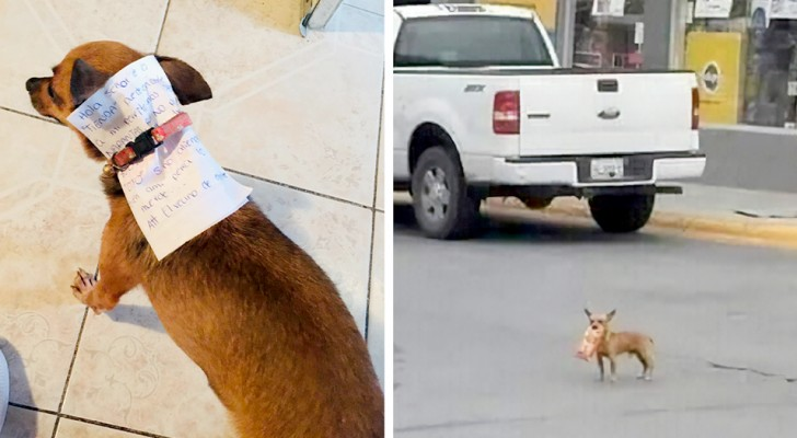 Hij mag zijn huis niet uit door de quarantaine, dus stuurt hij zijn chihuahua op missie om chips te kopen