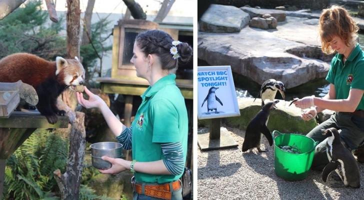 Alcune dipendenti decidono di trascorrere l'isolamento nello zoo in cui lavorano, per non lasciare soli degli animali