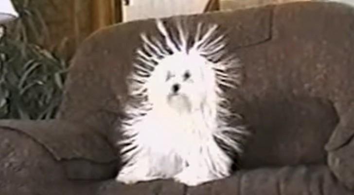 On dirait un chien normal mais à 0:20 il vous fera mourir de rire!